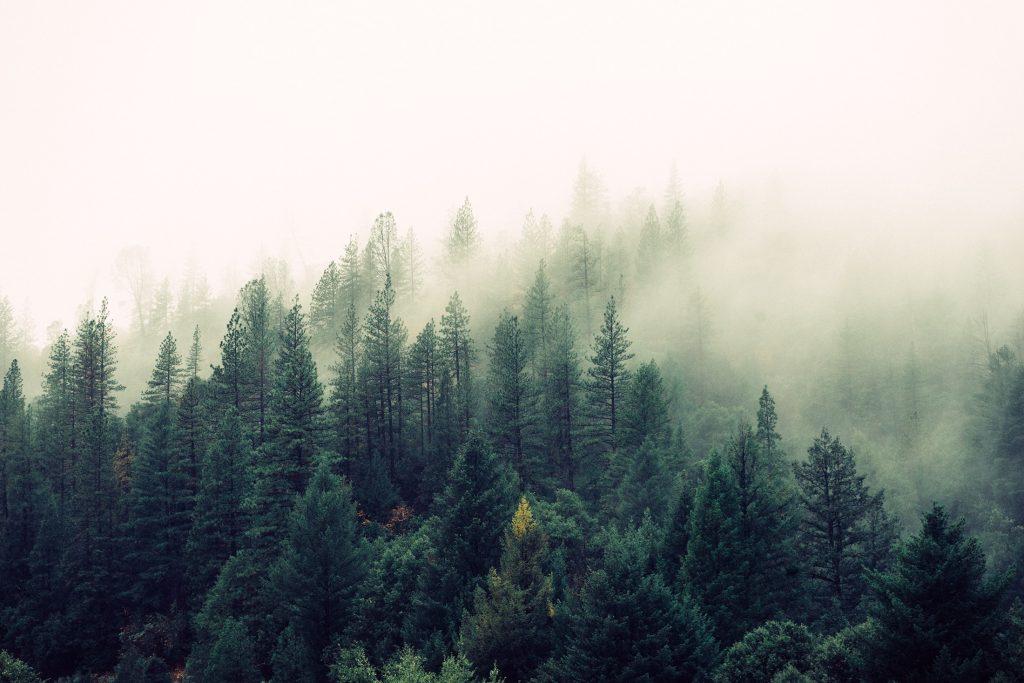 dense fog over a mountainside