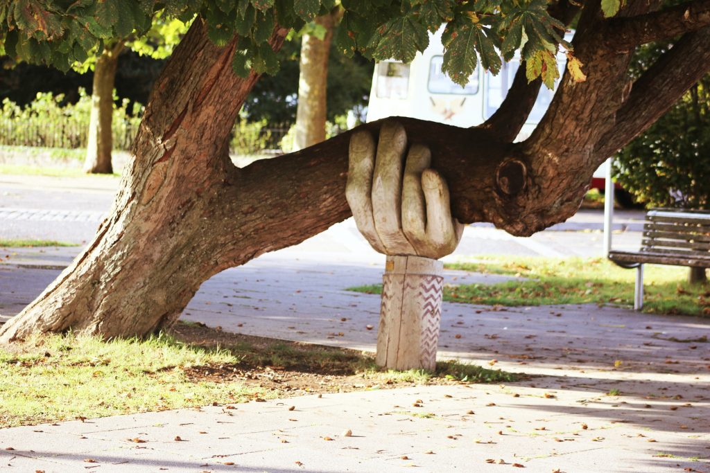 large tree with branch supported by hand scuplture
