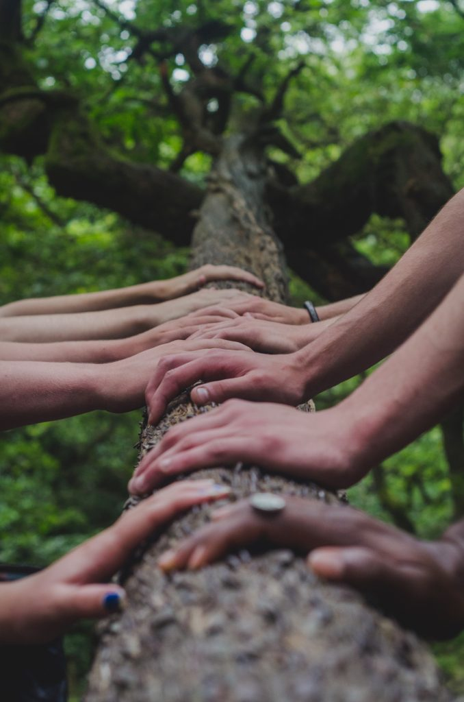 several people's hands on a tree trunk